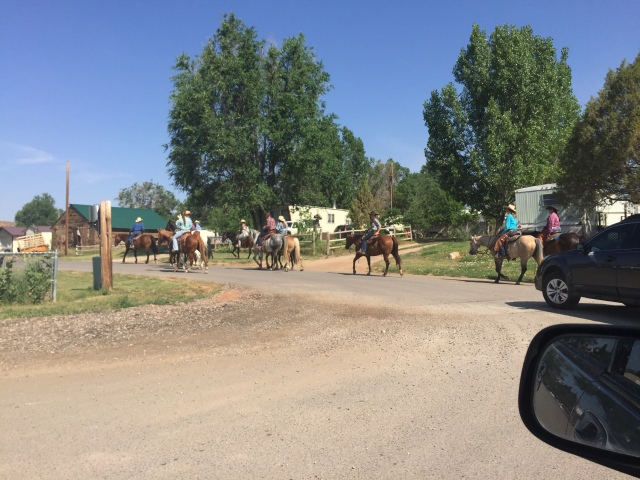 All the pretty horses...